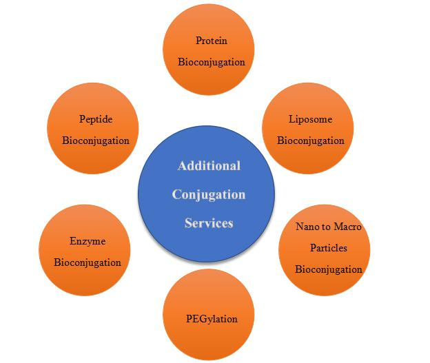 Additional Conjugation Services